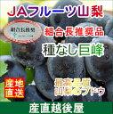 【フルーツ ぶどう ブドウ 送料無料】山梨県 JAフルーツ山...