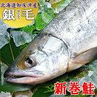 銀毛新巻鮭(北海道知床沖産)1尾2.5キロサイズ