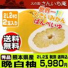 熊本八代特産晩白柚2Lサイズ2玉入り秀品5980円