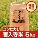 大人気の無人島米がさらに美味しく生まれ変わりました!【平成24年度産】徳島県産こしひかり100%「善入寺米」5kg【送料無料】※北海道、沖縄及び離島は別途発送料金が発生します。