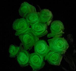 輝く女性の意味を込めて!暗闇で光る魔法のバラ!?【グリーン】光るバラ魔法のバラ1【サプライ...