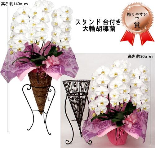 ★なんと台付★九州産新鮮高品質胡蝶蘭!!スタンド台にセットし飾るとなんと1.4mあります。スタン...