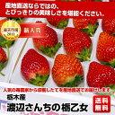 人気の苺農家から収穫したてを産地直送でお届けします。栃木産 渡辺さんちの 栃乙女約350g×2