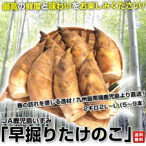 【送料無料】JA鹿児島いずみより春をお届けします! たけのこ 2キロ2L~L(5~9本)