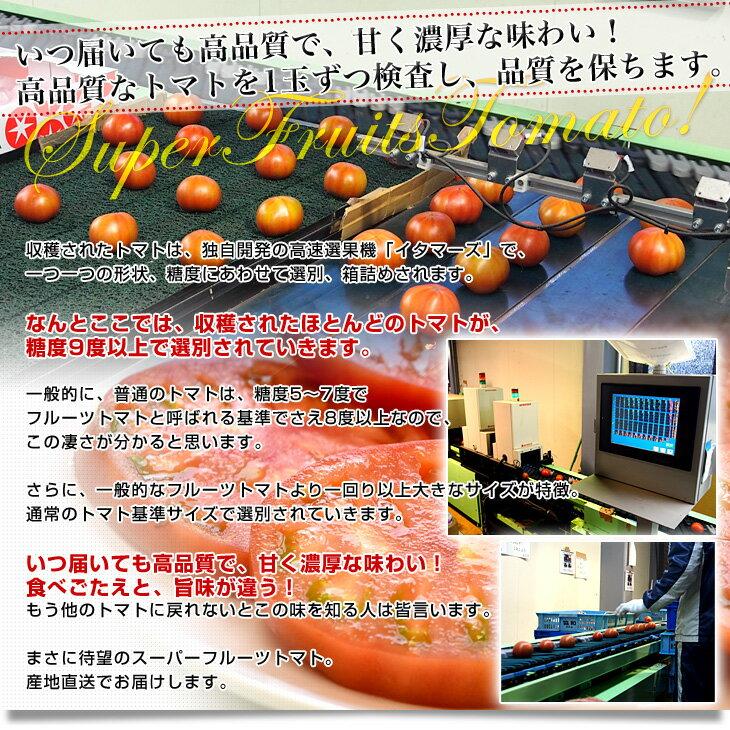 茨城県より産地直送 NKKアグリドリーム スーパーフルーツトマト 9度+ A品 約3キロ (20から35玉) 高糖度トマト