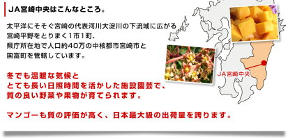 宮崎産マンゴー