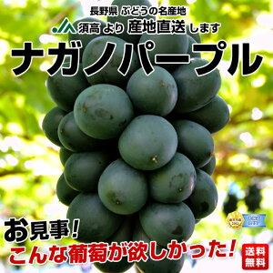 大注目品!種無し・皮ごと食べられ、ものすごく甘い大粒ぶどう長野県 JA須高 ナガノパープル 大...