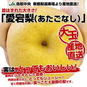 産地直送!並はずれたおおきさ!果肉はシャキとした食感で、とってもジューシー!JA鳥取中央 ...