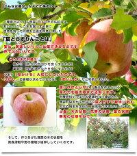 葉とらず太陽ふじりんご