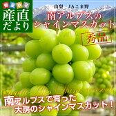 送料無料 山梨県より産地直送 JAこま野 シャインマスカット 秀品 1.2キロ(2房)