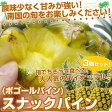 送料無料 沖縄県より産地直送 JAおきなわ スナックパイン3玉セット(ボゴールパイン) 約1.8キロ(1玉600g前後×3玉)パイナップル