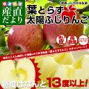 楽天お一人様2箱まで! 送料無料 JAつがる弘前 葉とらず太陽ふじりんご 糖度13度以上 約3キロ(9から13玉) 林檎 りんご リンゴ