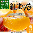 送料無料 愛媛県より産地直送 JAえひめ中央 紅まどんな 秀品 Lから3Lサイズ 約3キロ(10玉から15玉)オレンジ おれんじ