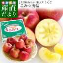 青森県より産地直送 JA津軽みらい 蜜入りりんご「こみつ」 秀品 2キロ (8玉から11玉) 送料無料 林檎 りんご