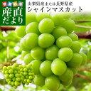 敬老の日にも最適 山梨県または長野県産 シャインマスカット 1.2キロ (2房から3房入り) 送料無料 ぶどう 葡萄
