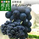 敬老の日にも最適! 長野県産 ナガノパープル 合計1.2キロ(2房から3房) ぶどう 葡萄 送料無料 ※クール便