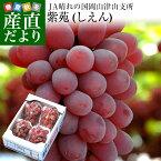 送料無料 岡山県より産地直送 JAつやま 紫苑(しえん) 秀品 2キロ(3房から5房) 葡萄 ぶどう ブドウ