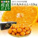 愛媛県より産地直送 JAにしうわ 日の丸みかん 千両 LからSサイズ 5キロ(40玉から60玉) 送料無料 蜜柑 ミカン