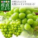 山梨県または長野県産 シャインマスカット1.2キロ(2房から3房)
