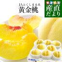 送料無料 福島県より産地直送 JAふくしま未来 ミスピーチ「黄金桃」 約2キロ(5玉から8玉) 桃 もも