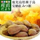 鹿児島県より産地直送 種子島安納紅「みつ姫」 約1.8キロ 送料無料 さつまいも 唐芋 からいも カライモ