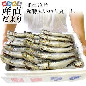 <水産物応援商品> 北海道産 超特大いわし丸干し 巨大キングサイズ 20尾セット 2キロ (1尾100g以上×20尾) 送料無料