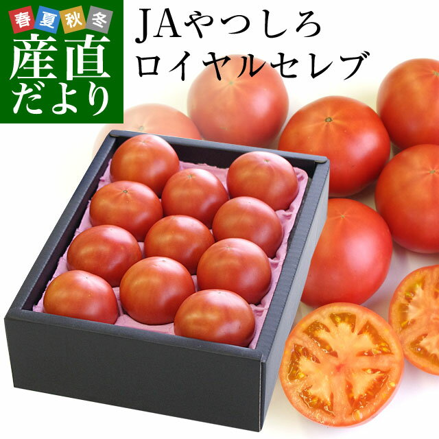 熊本県より産地直送JAやつしろフルーツトマトロイヤルセレブ約1キロMからSサイズ(11から16玉)送料無料とまと