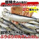 送料無料 北海道産 超特大いわし丸干し 巨大キングサイズ 2...