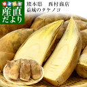 熊本県産 西村青果 タケノコ 2キロ (4本から8本前後) 送料無料 市場発送 たけのこ 筍 竹の子