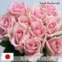 淡いピンクのバラ淡いピンクのバラ スイートアバランチェ 40cm×1本 ※20本以上より承ります/国...