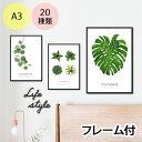ポスター インテリア A3 ボタニカル モダン 植物 おしゃれ アート...