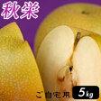 秋栄(あきばえ)5kg詰(16玉前後入) 鳥取県産 梨 訳あり(ご自宅用) 送料無料