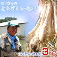 鳥取県産 特別栽培 田中さんの北条砂丘らっきょう3kg(根付き土付き らくだらっきょう) 送料無料
