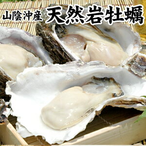 殻を開けてお届けOK!夏季限定「海のミルク」【山陰沖産】天然岩牡蠣1kgセット(5個前後入)[...
