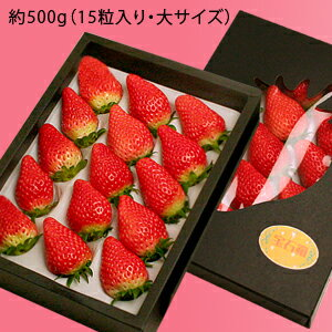 「宝石いちご」(章姫/あきひめ)500g(大サイズ15粒入)鳥取県境港産送料無料