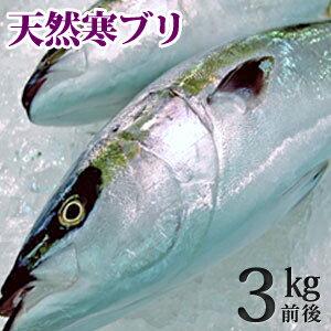 天然ブリ(寒鰤/寒ブリ)3kg前...