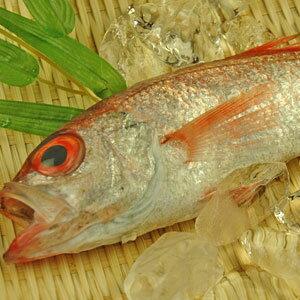 脂のりは大トロ並み!幻の高級魚さばいて発送可能!【山陰沖産】のどぐろ(赤むつ/ノドグロ)