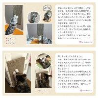 【ポイント10倍!】サンコー猫爪とぎキャットタワーソファー壁保護貼れるしつけダンボール吸着壁に貼れる猫のつめとぎ段ボール2枚組おくだけ吸着45×22cm/厚み25mm日本製