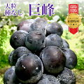 種無し大粒巨峰ぶどう葡萄ブドウ山梨県grape