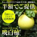 八代産(熊本産)晩白柚(ばんぺいゆ) L玉または2L、3L玉  訳ありのため特価!5個以上で送料無料!【ザボン】【ギフト】