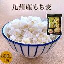 九州産もち麦 もち麦 九州産 1袋 800g 麦ごはん