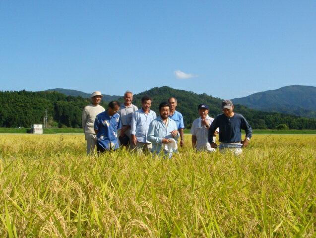 【特別栽培米】京都丹後豆っこコシヒカリ玄米30...の紹介画像2