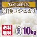 新米【特別栽培米】京都丹後コシヒカリ白米10kg 30年産