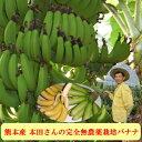バナナダイエットにもオススメ!熊本産 本田さんの完全無農薬栽培 バナナ 2kg (14~18本前後)