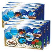 モルディブ シーシェルチョコレート 6箱セット