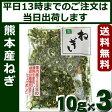 乾燥ねぎ 熊本県産 3個(10g×3)乾燥野菜 吉良食品