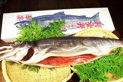 【送料無料】三陸産寒風干し新巻鮭姿造り1尾2k~3k!【smtb-TD】【tohoku】
