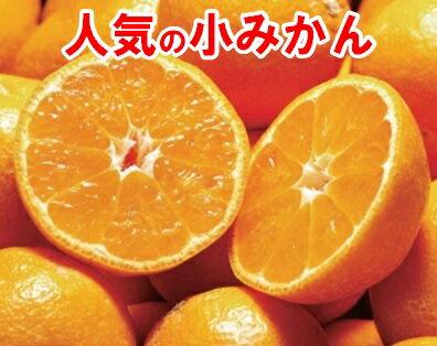 フルーツ・果物, みかん  5kg2 ()SSS smtb-TDsaitama