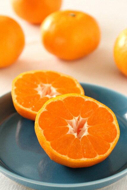 フルーツ・果物, みかん  10kg 10 smtb-TDsaitama