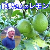 能勢さんのレモン無農薬国産